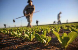 agricoltura del sud del mondo