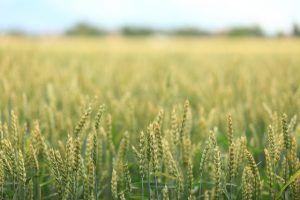 investire agricoltura